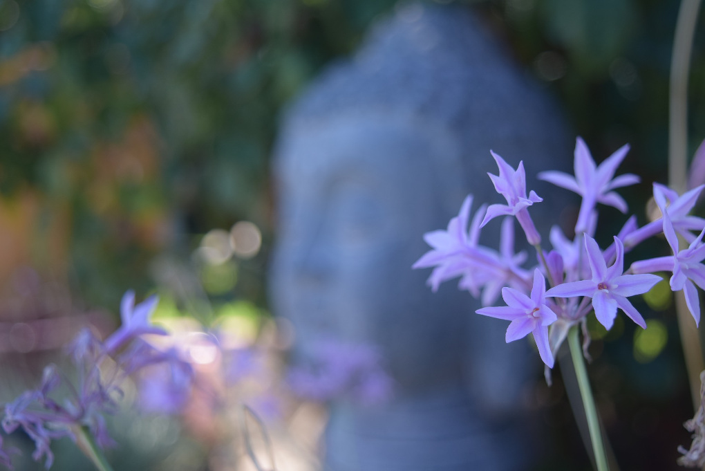 Buddha and mauve flowers by Karen Smith via Pixabay